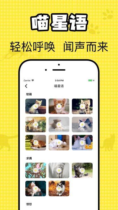 猫咪翻译官图2