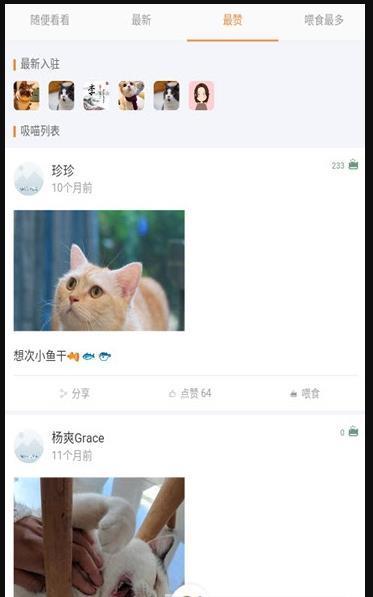 猫咪俱乐部图3