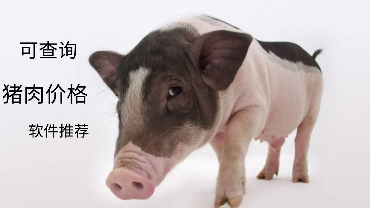 可以查询猪肉价格的软件推荐