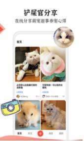 猫猫社图1