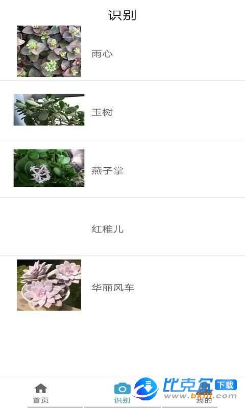 桃桃识植物图3
